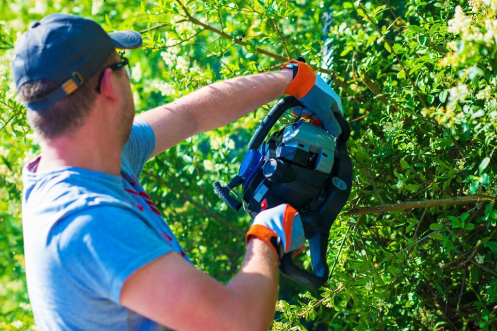 mansfield-tree-service-about_orig
