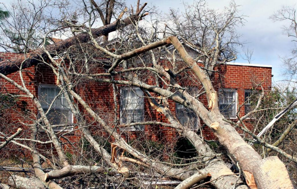 mansfield-tree-service-emergency-service-1_orig
