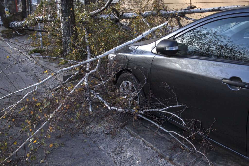 mansfield-tree-service-emergency-service-2_1_orig