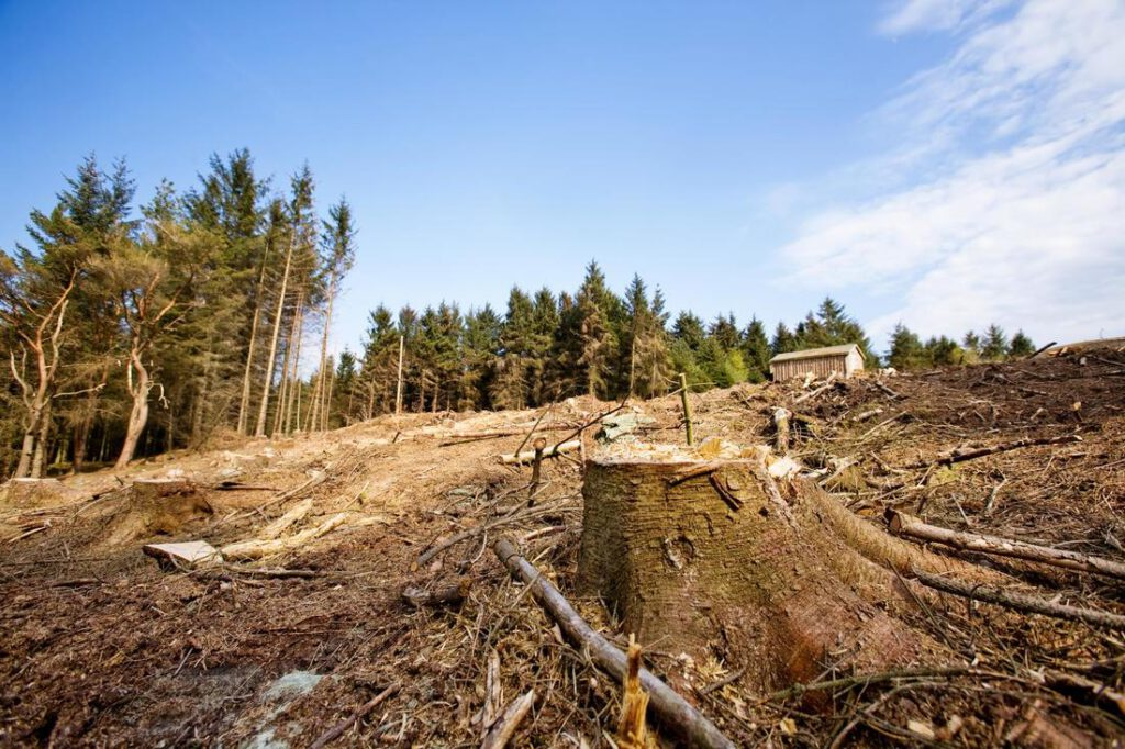 mansfield-tree-service-land-clearing-2_1_orig