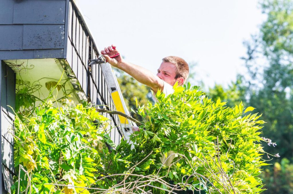 mansfield-tree-service-services_orig
