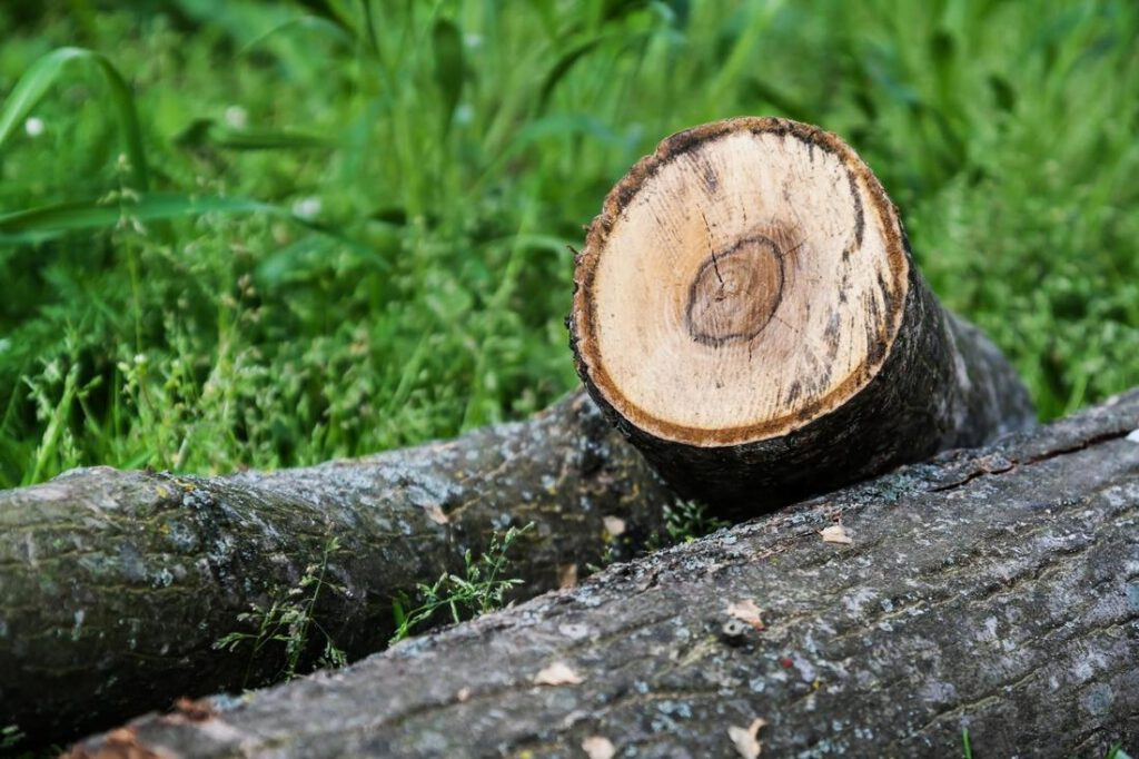 mansfield-tree-service-tree-and-stump-removal-2_orig
