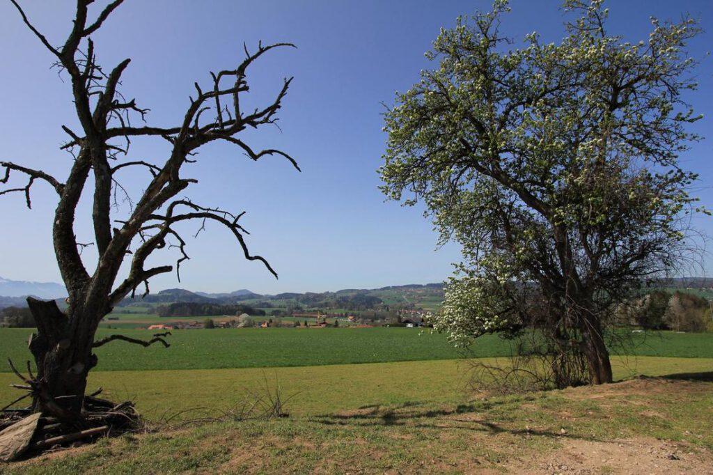 mansfield-tree-service-tree-treatment-1_orig